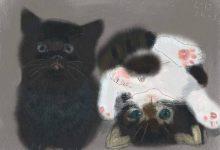 Gif Katze 220x150 - Gif Katze