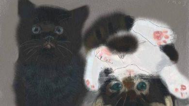 Gif Katze 390x220 - Gif Katze