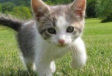 Give Me A Picture Of A Cat Bilder 220x150 - Give Me A Picture Of A Cat Bilder
