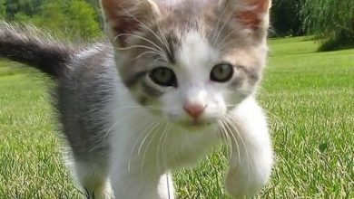 Give Me A Picture Of A Cat Bilder 390x220 - Give Me A Picture Of A Cat Bilder
