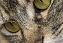 Good Cat Pictures Bilder 220x150 - Good Cat Pictures Bilder