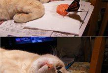 Goofy Cat Pictures Bilder 220x150 - Goofy Cat Pictures Bilder