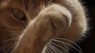 Google Images Cat Bilder 390x220 - Google Images Cat Bilder