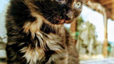 Google Images Cats And Kittens Bilder 390x220 - Google Images Cats And Kittens Bilder
