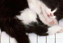 Google Katzenbilder 220x150 - Google Katzenbilder