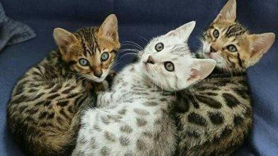 Google Pictures Of Cats Bilder 390x220 - Google Pictures Of Cats Bilder