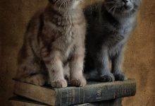 Google Show Me Pictures Of Cats Bilder 220x150 - Google Show Me Pictures Of Cats Bilder