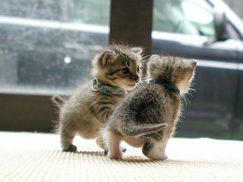 Gratis Katzen - Gratis Katzen