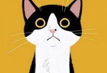 Gratis Katzenbabys 220x150 - Gratis Katzenbabys