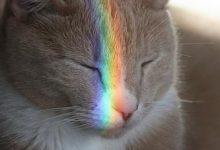Graue Katzen Bilder 220x150 - Graue Katzen Bilder