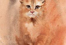 Great Cat Pictures Bilder 220x150 - Great Cat Pictures Bilder