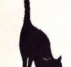 Große Katzen Bilder Bilder Kostenlos 234x220 - Große Katzen Bilder Bilder Kostenlos