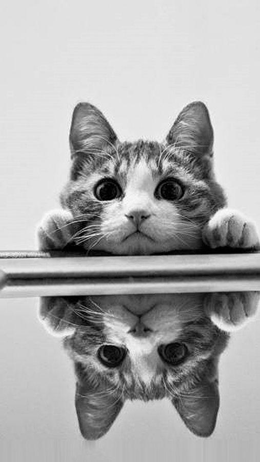 Große Katzen Bilder - Große Katzen Bilder
