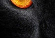 Große Katzenrassen 220x150 - Große Katzenrassen