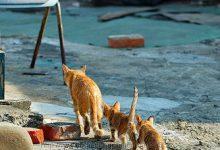 Gute Nacht Bilder Katzen 220x150 - Gute Nacht Bilder Katzen