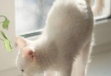 Gute Nacht Katzenbilder 220x150 - Gute Nacht Katzenbilder