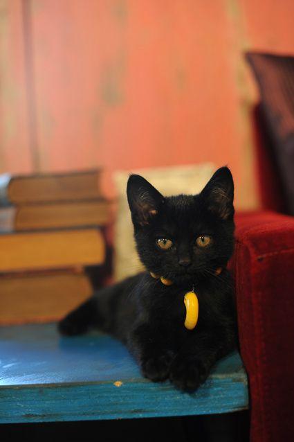 Guten Morgen Katzenbilder - Guten Morgen Katzenbilder