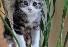 Hauskatzen Bilder Zum Ausdrucken 220x150 - Hauskatzen Bilder Zum Ausdrucken