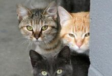 Haustier Katze 220x150 - Haustier Katze