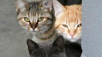 Haustier Katze 390x220 - Haustier Katze
