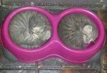 Haustier Katze Bilder Kostenlos 220x150 - Haustier Katze Bilder Kostenlos
