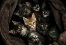 Hd Cute Cat Images Bilder 220x150 - Hd Cute Cat Images Bilder