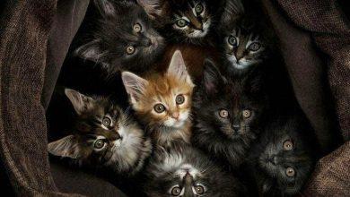 Hd Cute Cat Images Bilder 390x220 - Hd Cute Cat Images Bilder