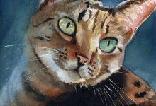 Hd Images Of Cute Cats Bilder 220x150 - Hd Images Of Cute Cats Bilder