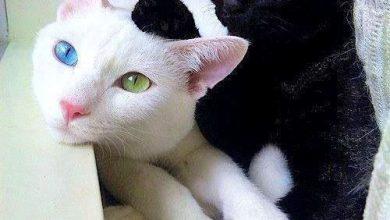 Hd Pic Of Cat Bilder 390x220 - Hd Pic Of Cat Bilder