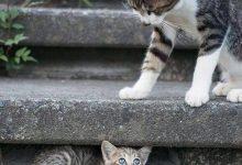 Hilarious Cat Pics Bilder 220x150 - Hilarious Cat Pics Bilder