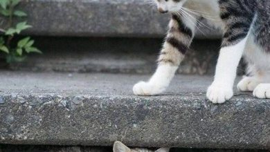 Hilarious Cat Pics Bilder 390x220 - Hilarious Cat Pics Bilder