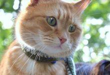Hilarious Cat Pictures Bilder 220x150 - Hilarious Cat Pictures Bilder