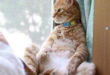 Hintergrund Katze 220x150 - Hintergrund Katze