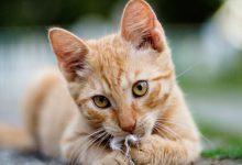 Hintergrundbilder Katzen Kostenlos 220x150 - Hintergrundbilder Katzen Kostenlos
