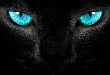 Hintergrundbilder Katzen Kostenlos Downloaden 220x150 - Hintergrundbilder Katzen Kostenlos Downloaden