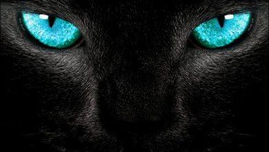 Hintergrundbilder Katzen Kostenlos Downloaden 390x220 - Hintergrundbilder Katzen Kostenlos Downloaden