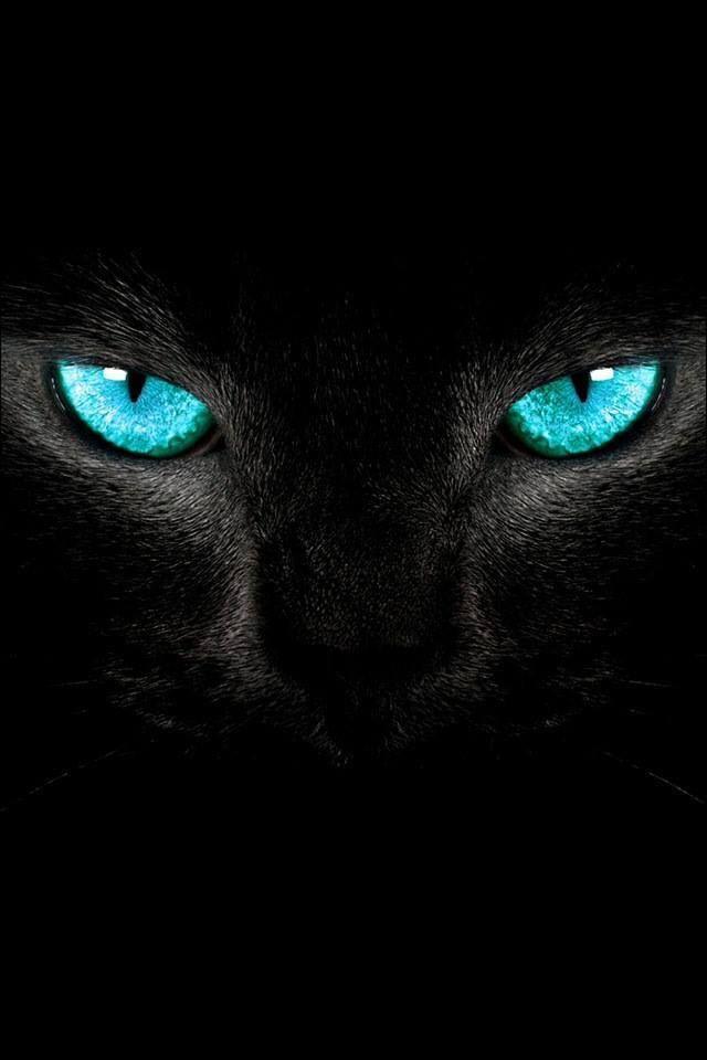 Hintergrundbilder Katzen Kostenlos Downloaden - Hintergrundbilder Katzen Kostenlos Downloaden