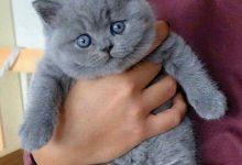 Hintergrundbilder Katzenbabys 220x150 - Hintergrundbilder Katzenbabys