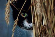 Hintergrundbilder Kostenlos Katzen 220x150 - Hintergrundbilder Kostenlos Katzen