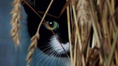 Hintergrundbilder Kostenlos Katzen 390x220 - Hintergrundbilder Kostenlos Katzen