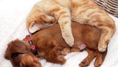 Hintergrundbilder Kostenlos Katzen Bilder Kostenlos 389x220 - Hintergrundbilder Kostenlos Katzen Bilder Kostenlos