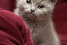 Hintergrundbilder Mit Katzen 220x150 - Hintergrundbilder Mit Katzen