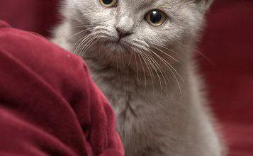 Hintergrundbilder Mit Katzen 357x220 - Hintergrundbilder Mit Katzen