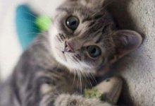 Hintergrundbilder Von Katzen 220x150 - Hintergrundbilder Von Katzen