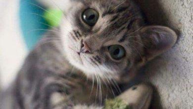 Hintergrundbilder Von Katzen 390x220 - Hintergrundbilder Von Katzen