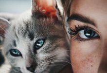 Images Of A Cat Bilder 220x150 - Images Of A Cat Bilder