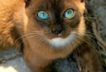 Images Of Beautiful Cute Cats Bilder 220x150 - Images Of Beautiful Cute Cats Bilder