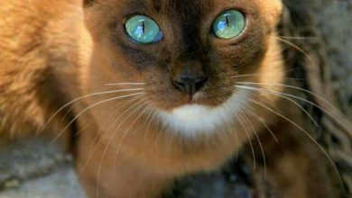 Images Of Beautiful Cute Cats Bilder 390x220 - Images Of Beautiful Cute Cats Bilder