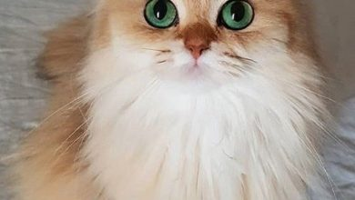 Images Of Cute Cats And Kittens Bilder 390x220 - Images Of Cute Cats And Kittens Bilder
