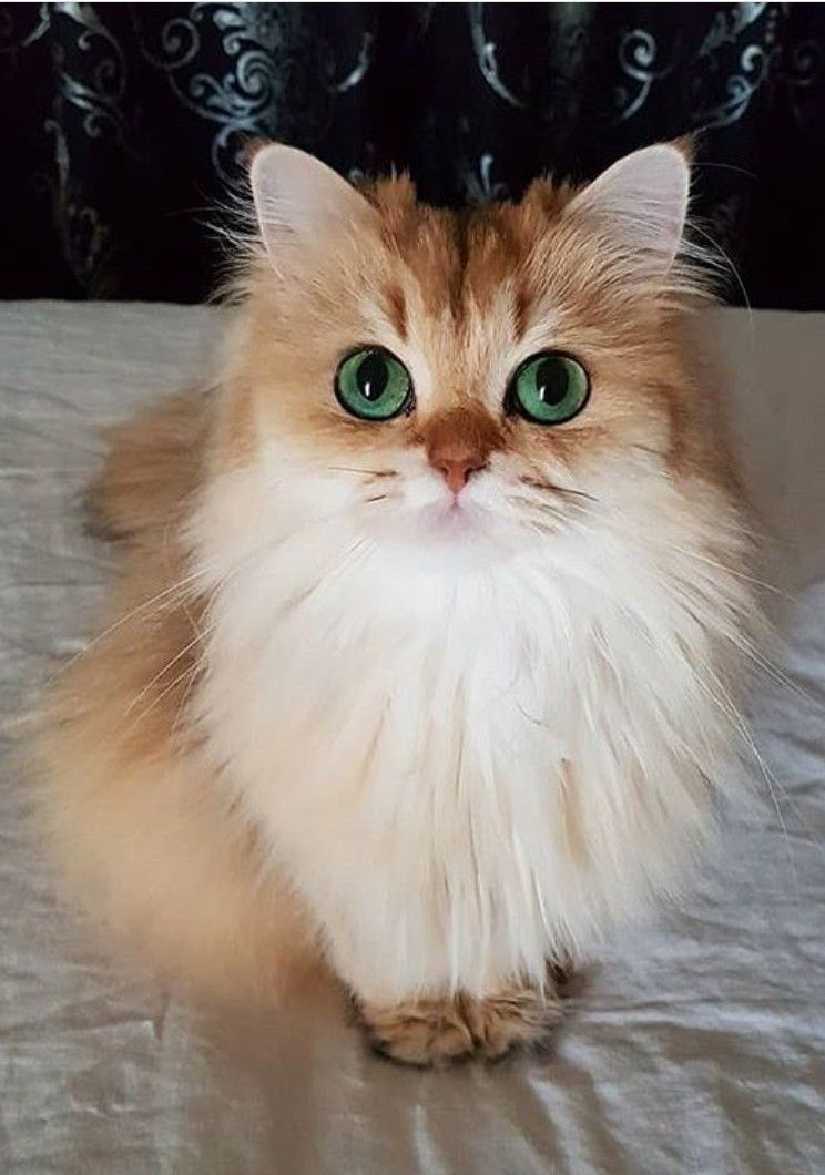 Images Of Cute Cats And Kittens Bilder - Images Of Cute Cats And Kittens Bilder